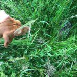Brut- und Setzzeit: Hunde an die Leine